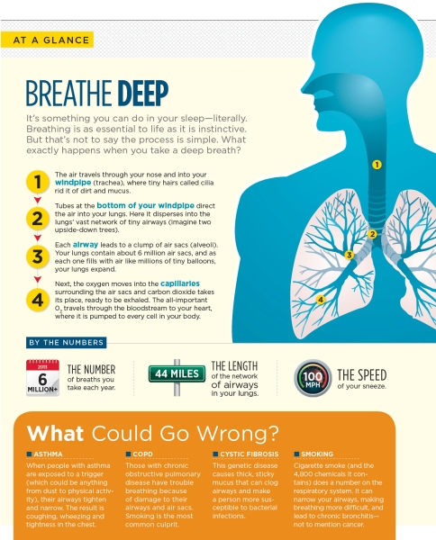 UMSP13_Breathing-Facts